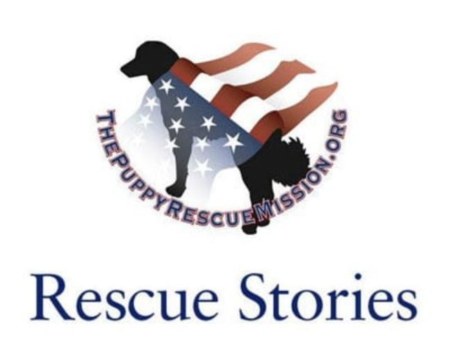 Linda's illustration for the Puppy Rescue Mission's rescue stories page.