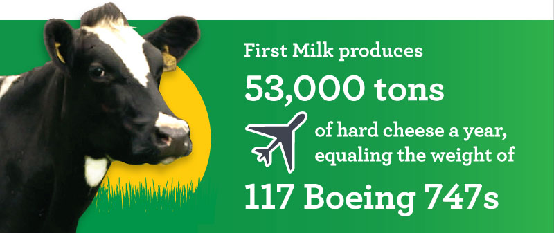 """An infographic states: """"First Milk produces 53,000 tons of hard cheese a year, equaling the weight of 117 Boeing 747s."""""""